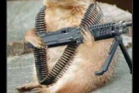 Rambo_Squirrel
